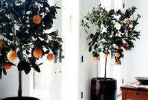 Interior - Tree inside
