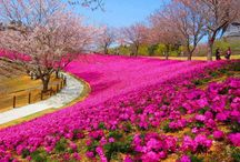 Gardens/Parks/Resorts