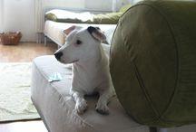 Zwierzęta / Jack Russell terrier. Moja pupilka Lola. Chwila odpoczynku przed kolejnymi harcami.
