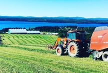 Farming in Newfoundland