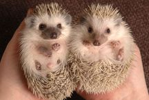 Cutest things EVER!!!!!!
