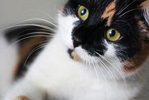 Cat Lover Iwu