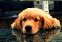 Puppy love / by Amanda Jackson
