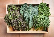Green Food Love / Kale. Spinach. Lettuce. Green veggies. / by Produce to the People Tasmania