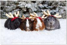 Piggily Pigs!