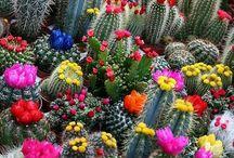 Catáceas (Cacti) / by Felipe Parra