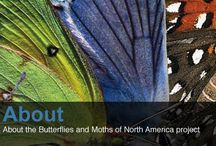 Butterfly links / The best butterfly links from around the web.