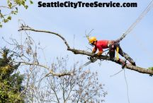 Tree Trimming Seattle Tree Service / Seattle City Tree Service are tree trimming specialists.  We invite you to call us if you are in need of tree trimming services