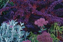 Plant combinations for the Garden