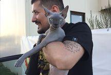 Sphynx cat. Priya