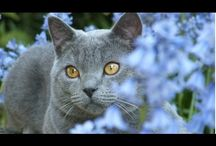 CATS AND ALL ABOUT CATS / cats, breeds, care, vitamins, color, content, photo, picture