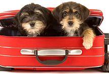 City-Trips mit Hund / Die schönsten City-Trips mit Hund