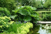 plants around ponds