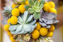 arrangement col yellows