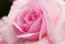 La Vie en Rose Classique