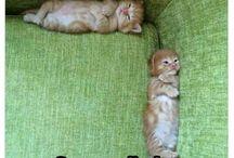 Cute aminals