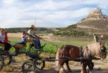¿Qué hacer en Bodegas Comenge? / En Curiel de Duero muere la carretera y a partir de aquí todo es tranquilidad y hermosos caminos que zigzaguean entre los valles que rodean el pueblo. Recorrer estos caminos es una experiencia inigualable que nos permite disfrutar de la naturaleza que nos rodea de forma sencilla y plena, sin prisas, sin coches, sólo nosotros y el campo.