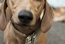 Dachshunds / by Val Kent