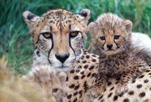 Wild Animal Photos / by Jerry Slusar