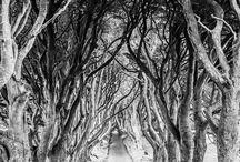 Steven Cox Instagram Photos Gorgeous #trees. The Dark Hedges. Northern #Ireland