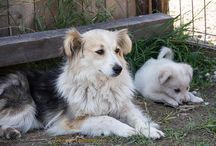 Tierheim Ditrau Shelter / Dogs