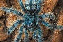 TARANTULA&SPIDERS