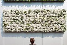 vertikales Gärtnern mit Karoo / Karoo ist ein all-in-one Paket für die Realisierung Deiner eigenen grünen Wand. Ob im Innen- oder Aussenbereich - steck einfach Deine Samen in die fertig mit Erde befüllten Quader und lass es growen.
