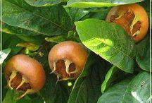 bitki ve meyveler