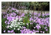 Plants you may like to plant in your garden