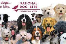 Doggy News...