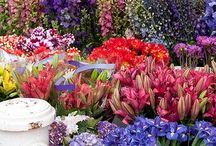 Flowers & Gardens / by Dawn Vivian