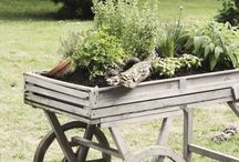 Outdoor ideas / by Tracy Rodgers