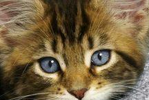 15 Purosome cat