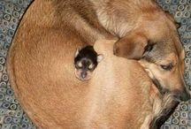 Doggies / by Nicole Rino