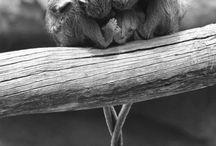 Maurycego zwierzatka rozne