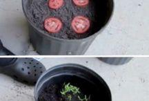 plantas para huerta