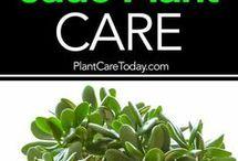 Garden- succulent - cactus