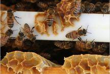 Garden ~ Beekeeping