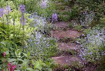The garden. / Nature, life outdoore.
