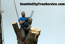 Tree Service Seattle / You can find us at http://www.seattlecitytreeservice.com.  Fill out the free estimate form while there and someone from our helpful team will get back to you promptly.
