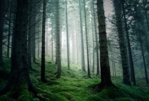 Forest Inspiration
