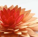 Paper or fabric flowers / by Jeanne Wissmann