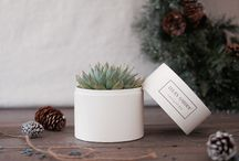 Corporate Gifts Idea / Unique gift idea. Gift for coworker, employees, clients. The succulent box can be customized with cover sleeves. Gift that keeps on giving.
