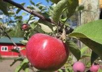 Sharkey's Orchard