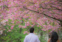 Karya Park Cherry Blossom Engagement