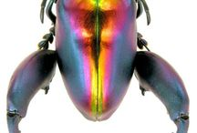 Insects are Aliens / The beauty and structure found in insects