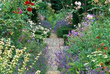Anglické zahrady