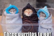 Cats, Funny Pictures