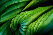 Colors of Green