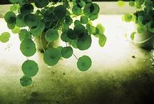green things / by Joni Toth